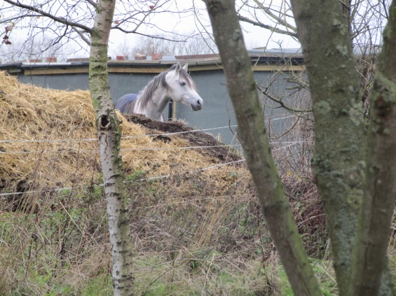 Watching Horse