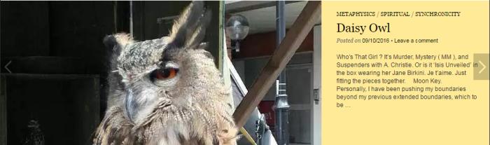 merovee-daisy-owl