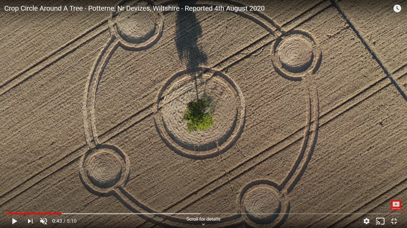 Potterne crop circle around tree 2