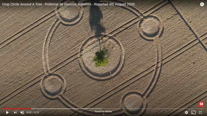 Potterne crop circle around tree 2